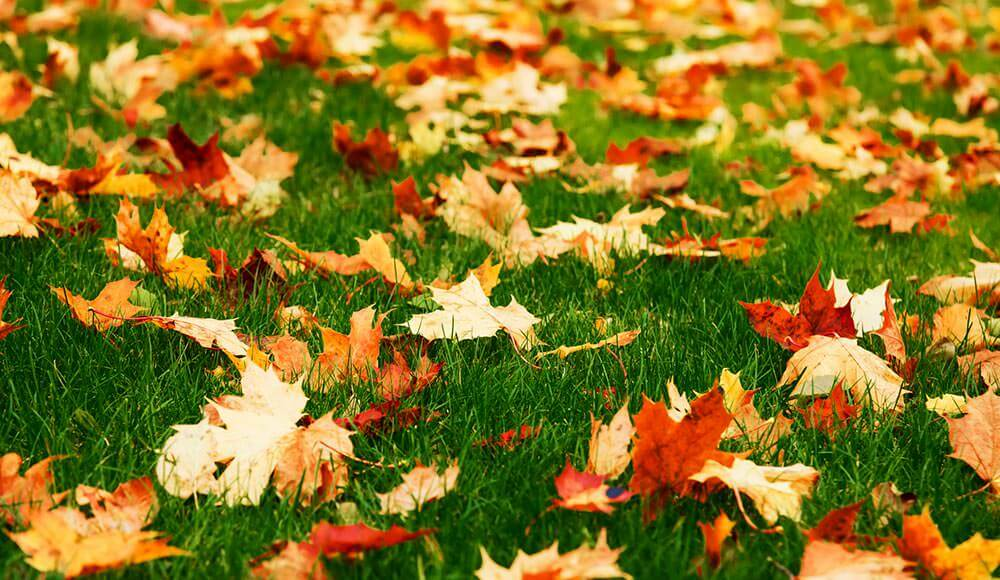 Image result for lawn in fall